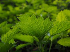 Introducción sobre las hierbas medicinales