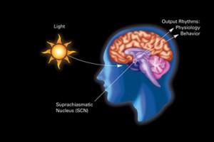 La relación del sol y la glándula pineal y su efecto magnético y con el ciclo circadiano