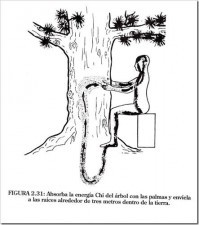 Los árboles sanadores 17 y 20 Órganos  Sensoriales Especies Método de Sanación Explicación Todo lo que Debe Saber