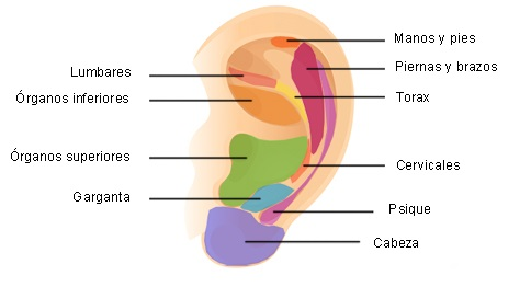 Gemoterapia en reflexologia