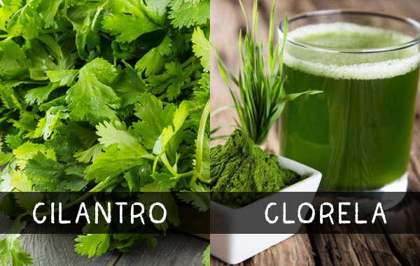 cilantro-y-clorela-para-detox.jpg