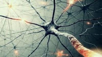 Fisiología de la meditación