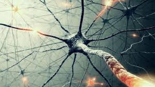 neuronas-meditacion.jpg