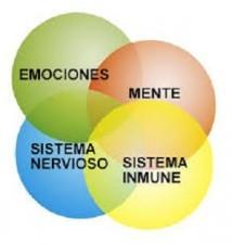 Psiconeuroinmunobiología Efectos de las Palabras no Dichas Estrés Y Salud Escultor de Nuestro Cerebro Video del Dr. Mario Alonso Puig Pdf para Bajar Como el sistema inmune es afectado por todo lo que decimos hacemos y pensamos