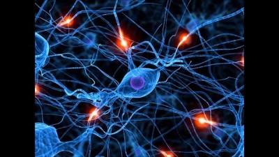 Ondas cerebrales y fisiología  Lista de frecuencia de onda y su relación con el cuerpo humano
