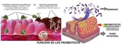 Alimentos fermentados y probióticos Lista y beneficios para la salud y Pdf para bajar