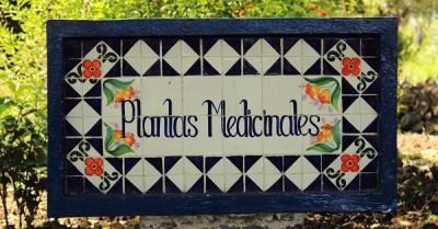 Las plantas medicinales Distintas formas de utilizarlas Recolección Y Preparación