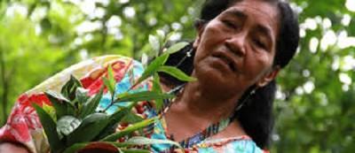 Anticonceptivos naturales Etnobotánica Hierbas guaraníes ancestrales