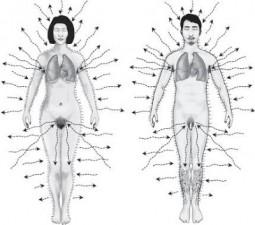 Chi kung 6 sonidos sanadores Refuerzan y depuran los órganos Y desarrolla el espíritu
