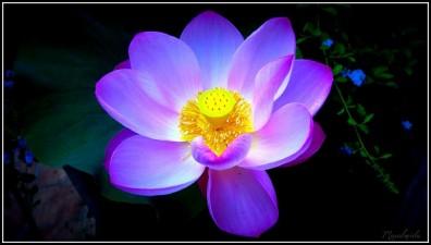 Mantra que transmuta en un Buda Om Mani Padme Hum