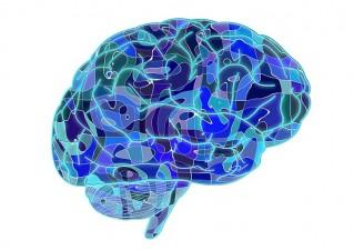 El cerebro como holograma