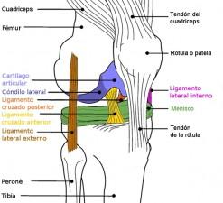 Rodilla y rotura de ligamentos