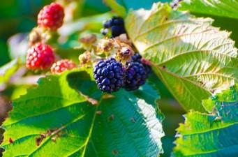 Tu alimento afecta tu espiritualidad ¿Si cultivamos plazas y lotes valdíos?