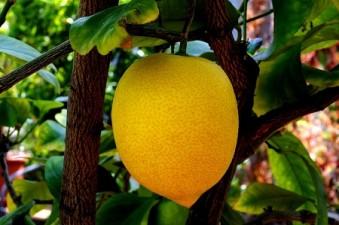 Uso clínico de  vitamina C 1