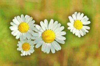 Medicamentos más usados en Medicina Homeopática 2