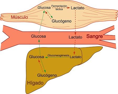 Hígado-Graso.jpg