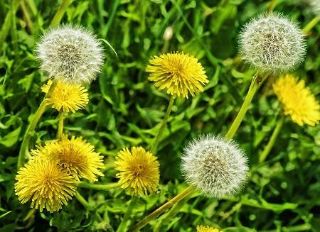 Plantas-medicinales-cultivables2.jpg