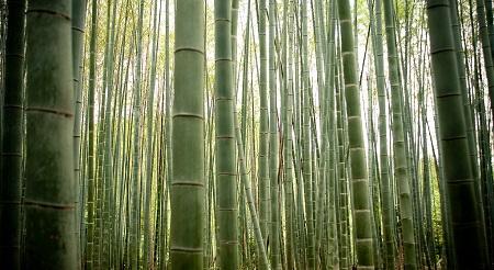 Bambú-multiuso.jpg