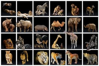 Extinción ¿Cuáles son las causas? Las percepciones místicas de la ciencia Dr. Bruce Lipton El poder del corazón