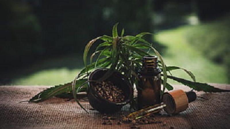 Cannabis Uso medicinal Informes de varios países Un manual y otros informes en PDF para bajar